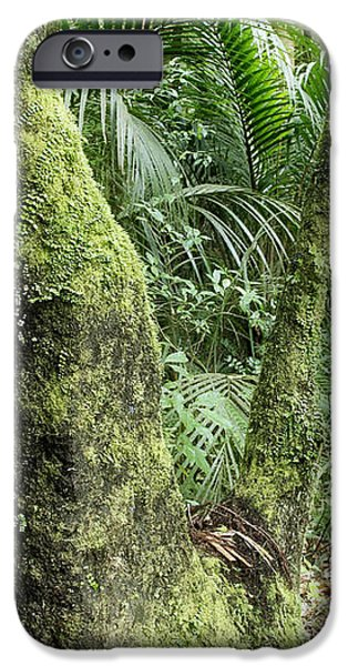Tropical forest iPhone Case by Les Cunliffe