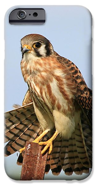 Small iPhone Cases - American Kestrel iPhone Case by Ira Runyan