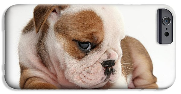 Cute Puppy iPhone Cases - Bulldog Pup iPhone Case by Mark Taylor