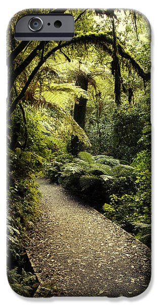 Pathway iPhone Cases - Tropical forest iPhone Case by Les Cunliffe