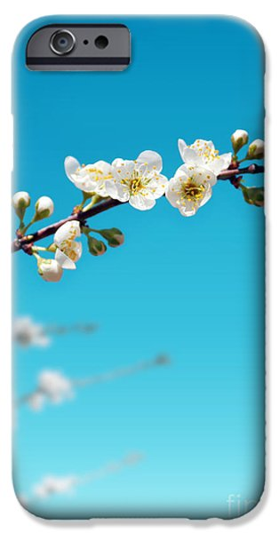 Close Up Floral iPhone Cases - Almond Branch iPhone Case by Carlos Caetano