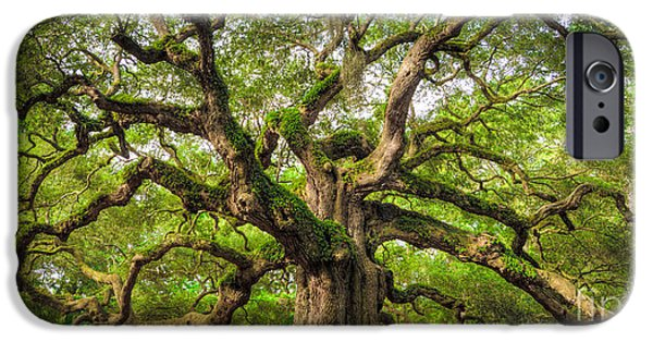 Large iPhone Cases - Angel Oak Tree of Life iPhone Case by Dustin K Ryan