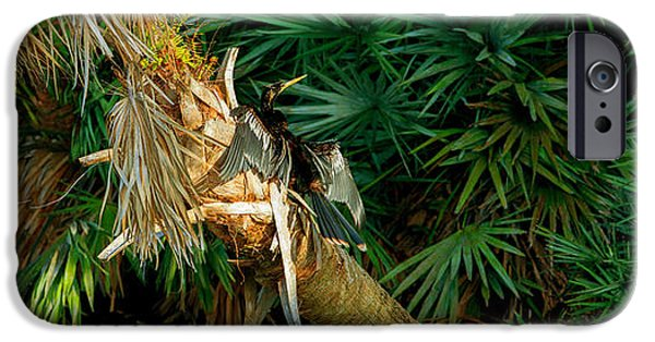 Anhinga iPhone Cases - Anhinga Anhinga Anhinga On A Tree iPhone Case by Panoramic Images