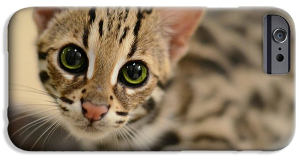 Kitten iPhone Cases - Asian Leopard Cub iPhone Case by Laura  Fasulo