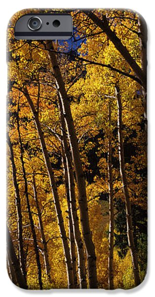Autumn iPhone Cases - Aspen Trees In Autumn, Colorado, Usa iPhone Case by Panoramic Images