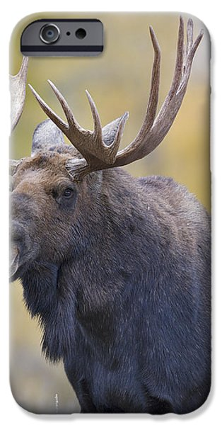 Autumn Bull Moose III iPhone Case by Gary Langley