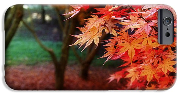 Leaf Change iPhone Cases - Autumnal forest iPhone Case by Les Cunliffe