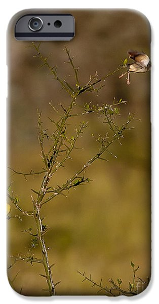 Flight iPhone Cases - Bagafecht Weaver   #6872 iPhone Case by J L Woody Wooden