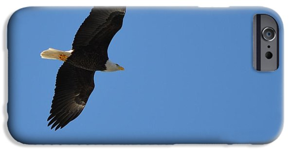 Winter In Maine iPhone Cases - Bald Eagle iPhone Case by James Petersen