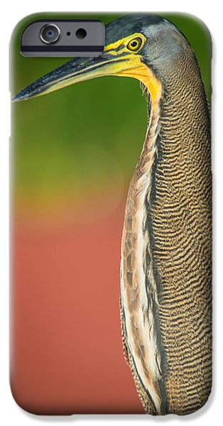 The Tiger iPhone Cases - Bare-throated Tiger Heron Tigrisoma iPhone Case by Panoramic Images