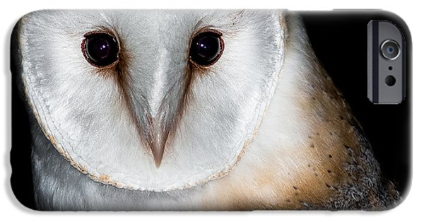Barn Owl iPhone Cases - Barn Owl  iPhone Case by Ian Hufton
