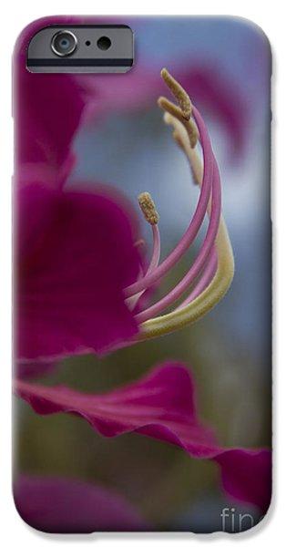 Bauhinia Blakeana - Hong Kong Orchid - Hawaiian Orchid Tree iPhone Case by Sharon Mau