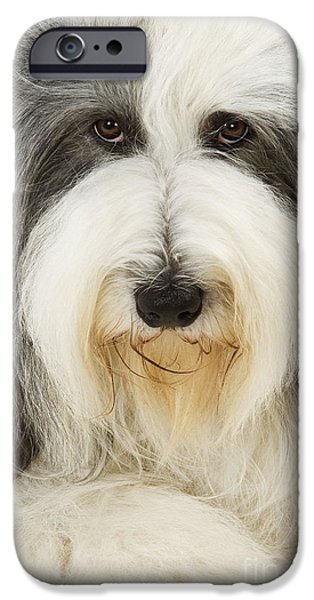 Dog Close-up iPhone Cases - Bearded Collie iPhone Case by Jean-Michel Labat