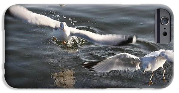 Flying Seagull Pyrography iPhone Cases - Beauty Of Wild  iPhone Case by Valia Bradshaw