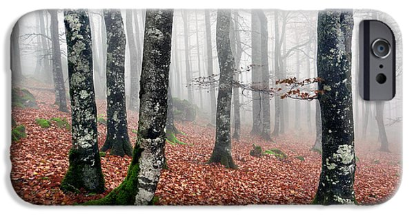 Autumn Trees iPhone Cases - Beech Forest With Fog In Autumn iPhone Case by Mikel Martinez de Osaba