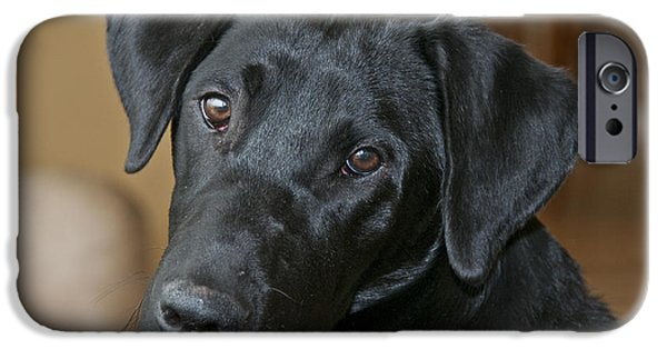 Black Dog iPhone Cases - Black Lab iPhone Case by William H. Mullins