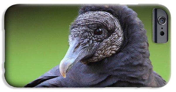 Vulture iPhone Cases - Black Vulture Portrait iPhone Case by Bruce J Robinson