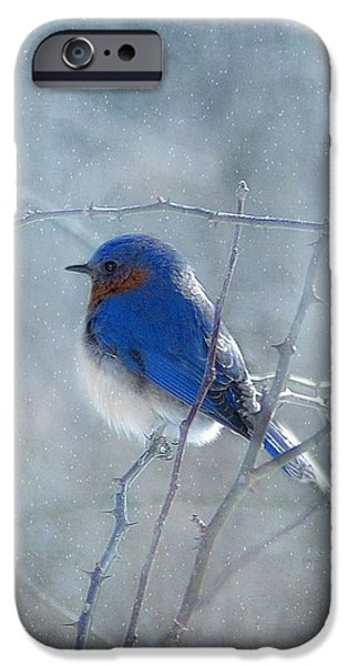 Snow iPhone Cases - Blue Bird  iPhone Case by Fran J Scott