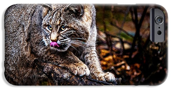 Bobcats Photographs iPhone Cases - Bobcat iPhone Case by Jim DeLillo