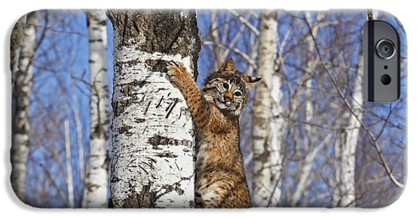 Lynx Rufus iPhone Cases - Bobcat iPhone Case by Linda Freshwaters Arndt