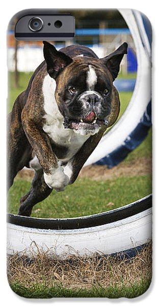 Boxer Dog iPhone Case by Johan De Meester