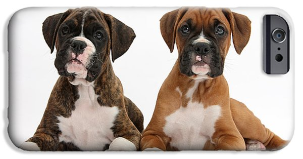 Boxer Puppy iPhone Cases - Boxer Puppies iPhone Case by Mark Taylor