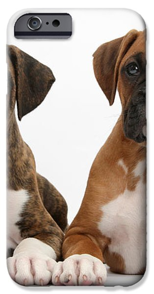 Boxer Puppies iPhone Case by Mark Taylor