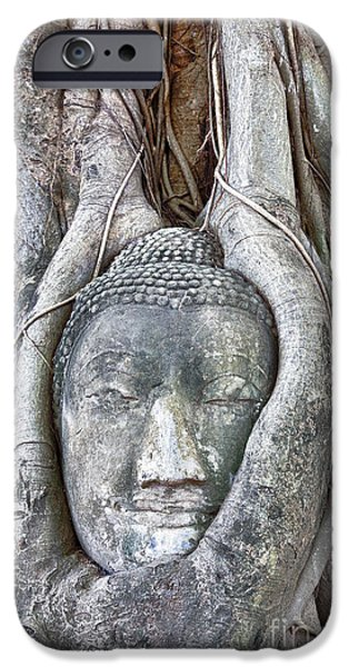 Statue Portrait iPhone Cases - Buddha Head in Tree iPhone Case by Fototrav Print