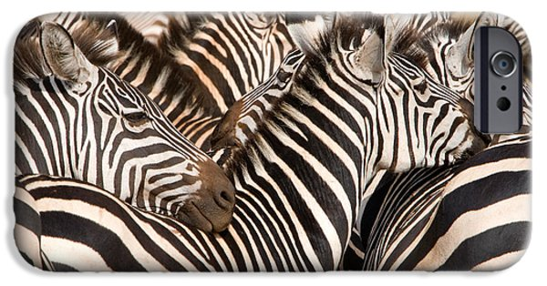 Fauna iPhone Cases - Burchells Zebras Equus Burchelli iPhone Case by Panoramic Images