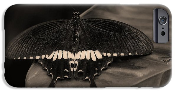 Tropics Pyrography iPhone Cases - Butterfly iPhone Case by Riccardo Franke