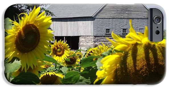 Buttonwood Farm iPhone Cases - Buttonwood Farm iPhone Case by Michelle Welles