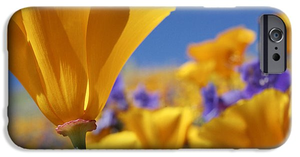 States iPhone Cases - California Poppies Antelope Valley iPhone Case by Tim Fitzharris