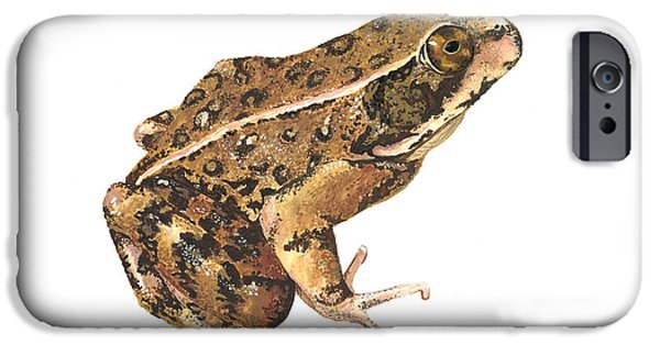 Biology Paintings iPhone Cases - California Red-legged Frog iPhone Case by Cindy Hitchcock