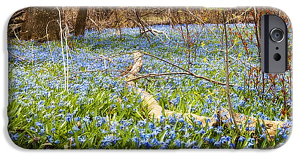 Botanical Photographs iPhone Cases - Carpet of blue flowers in spring forest iPhone Case by Elena Elisseeva