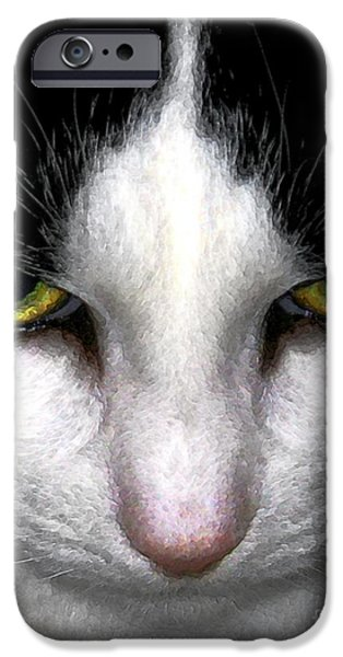 Photos Of Cats iPhone Cases - Casey iPhone Case by Dale   Ford