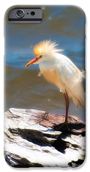 Cattle Egret iPhone Cases - Cattle Egret in Breeding Plumage iPhone Case by Rich Leighton