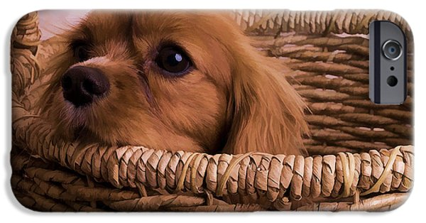 Basket iPhone Cases - Cavalier King Charles Spaniel Puppy in basket iPhone Case by Edward Fielding