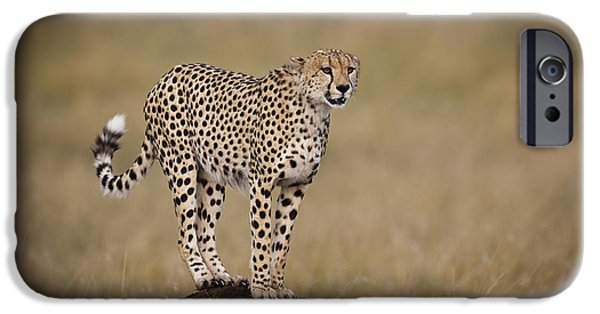 Mounds iPhone Cases - Cheetah On Termite Mound iPhone Case by John Shaw
