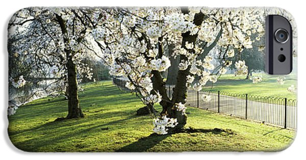 Cherry Blossoms iPhone Cases - Cherry Blossom In St. Jamess Park, City iPhone Case by Panoramic Images