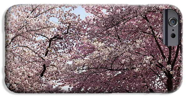Cherry Blossoms iPhone Cases - Cherry Blossom Trees In Bloom iPhone Case by Panoramic Images