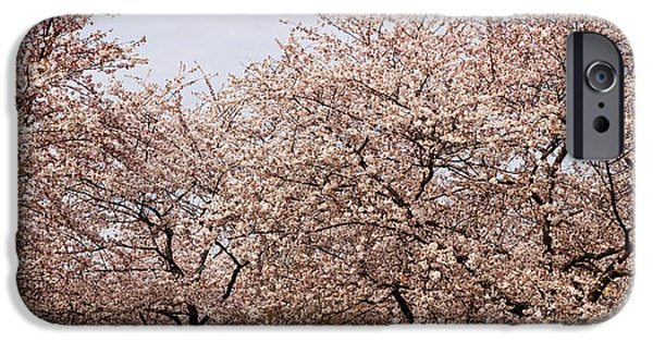 Cherry Blossoms iPhone Cases - Cherry Blossom Trees In Potomac Park iPhone Case by Panoramic Images