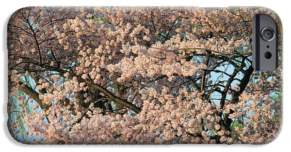 Cora Wandel iPhone Cases - Cherry Blossoms In Pink And Brown iPhone Case by Cora Wandel