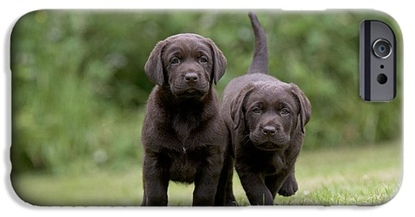 Chocolate Lab iPhone Cases - Chocolate Lab Puppy Dogs iPhone Case by John Daniels