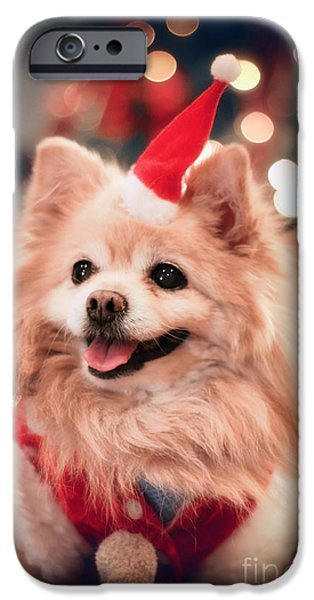 Christmas Eve iPhone Cases - Christmas Dog iPhone Case by Charline Xia