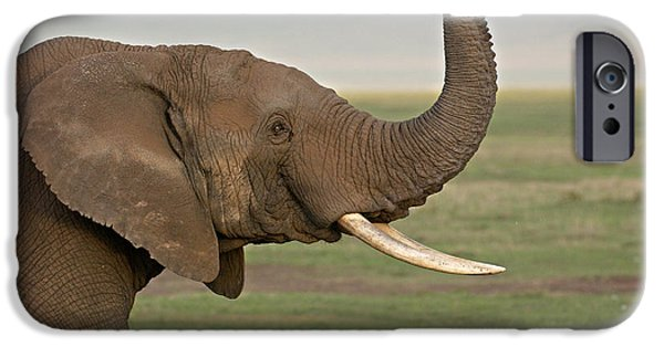Elephants iPhone Cases - Close-up Of An African Elephant iPhone Case by Panoramic Images