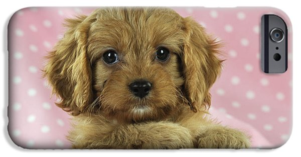 Dog Close-up iPhone Cases - Cockapoo Puppy Dog iPhone Case by John Daniels