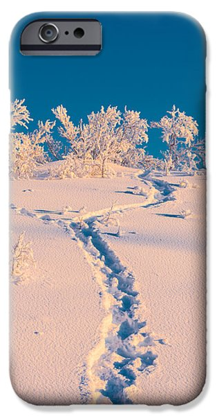 Wintertime iPhone Cases - Cold Winter In Lapland Sweden iPhone Case by Panoramic Images