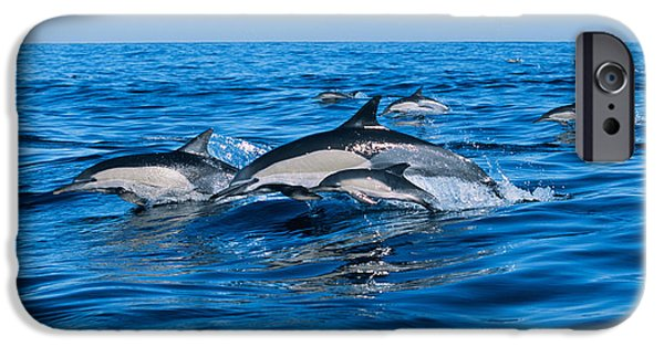 Freedom iPhone Cases - Common Dolphins Breaching In The Sea iPhone Case by Panoramic Images