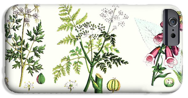 Botany iPhone Cases - Common Poisonous Plants iPhone Case by English School