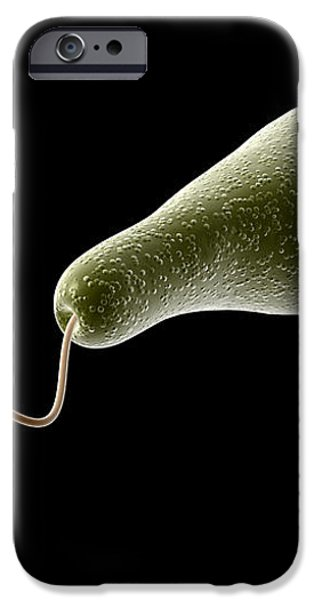 Conceptual Image Of Euglena iPhone Case by Stocktrek Images